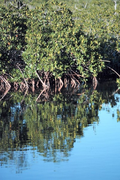 ekosystemy na  bagnach namorzynowych