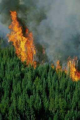 pożary lasów