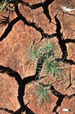 sucha ziemia w Afryce