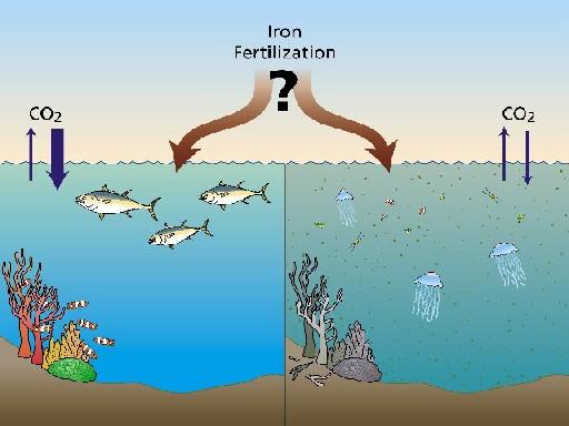 outcomes of ocean iron fertilisation